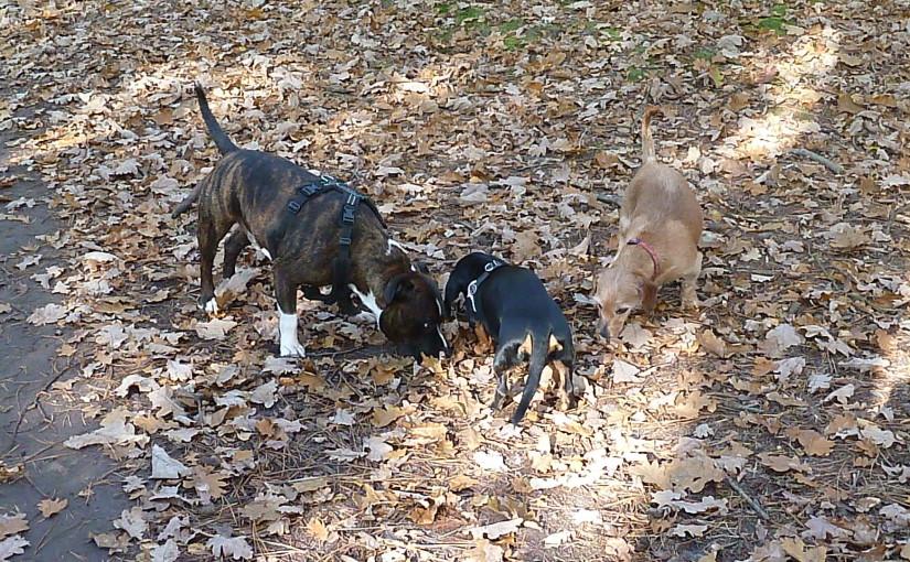 hondenuitlaatservice groepje