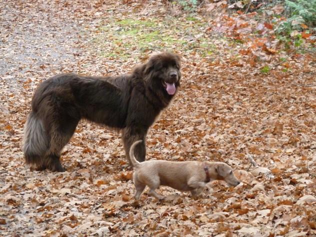 Hondenuitlaatservice Veldhoven Ziggy en Joy 4