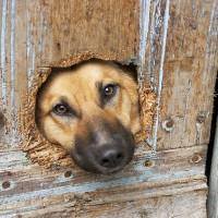 Honden gedragstherapie